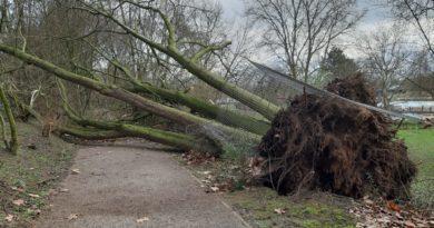 Verhaltenshinweise bei Sturmwetterlagen: